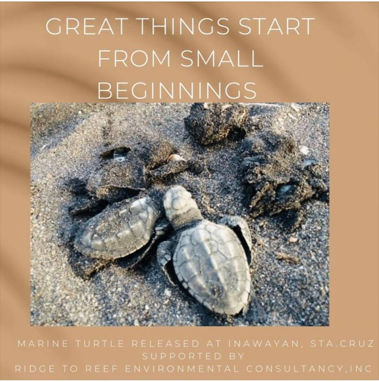 Marine Turtle released at Inawayan, Sta.Cruz, Davao del Sur