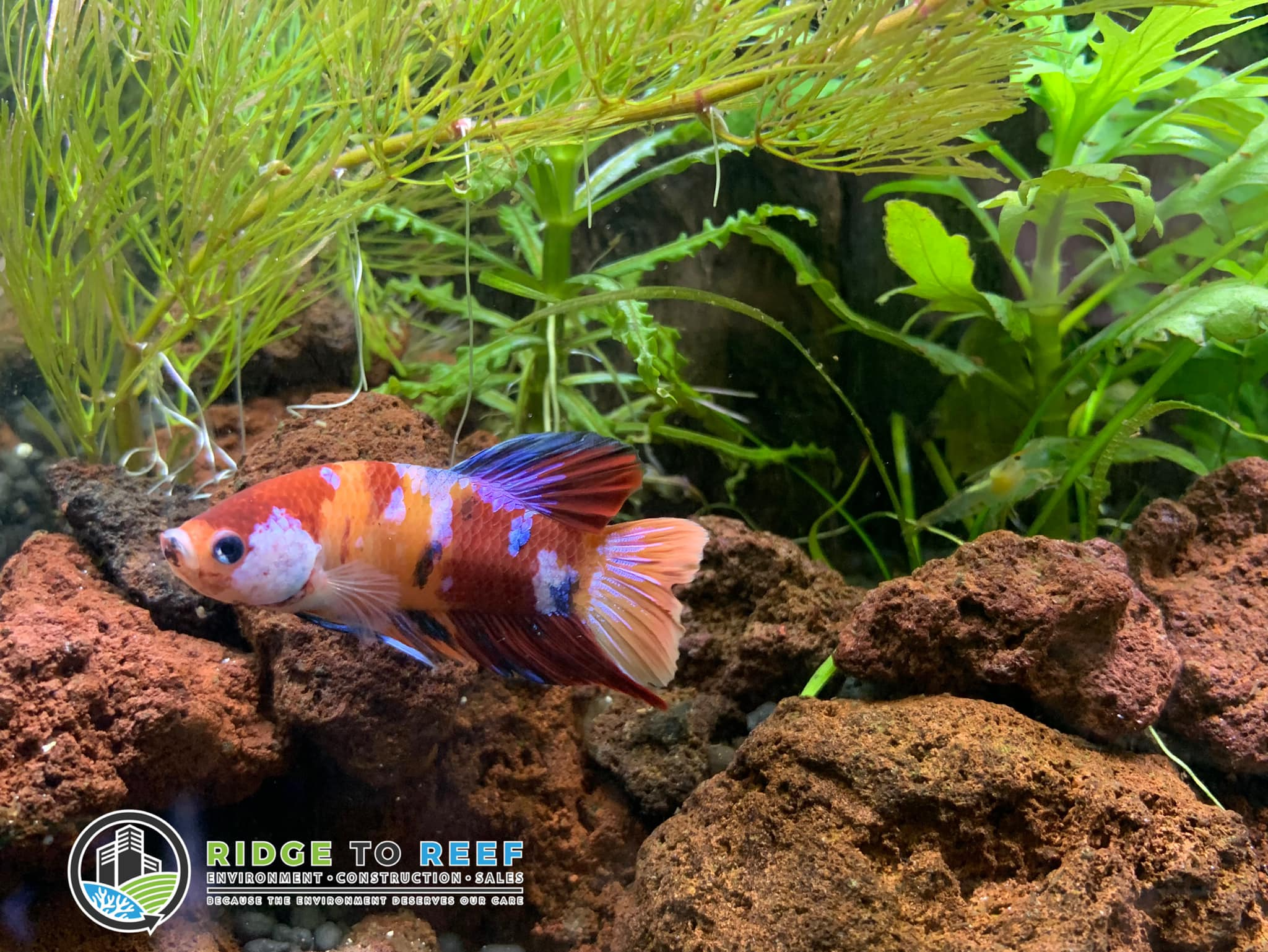 Welcome to the beautiful world of R2R's Biotope Aquascape